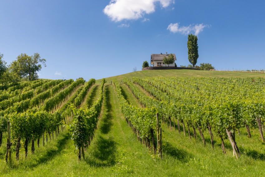 奥地利的葡萄园