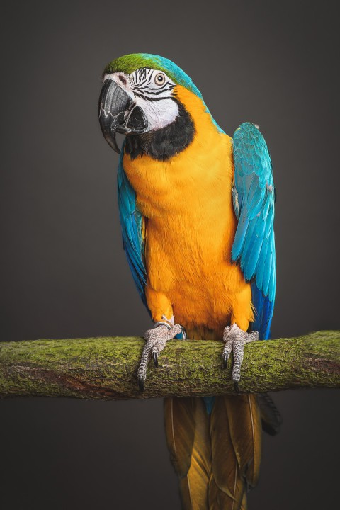 彩色的鹦鹉